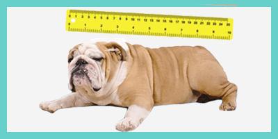 Mesure taille chien pour coussin apaisant ou lit apaisant