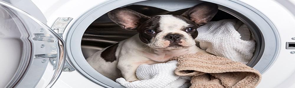 ᐅComment laver un coussin pour chien