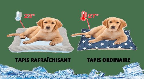 différence tapis ordinaire et tapis rafraîchissant pour chien et chat