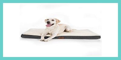 coussin matelas orthopédique pour chien