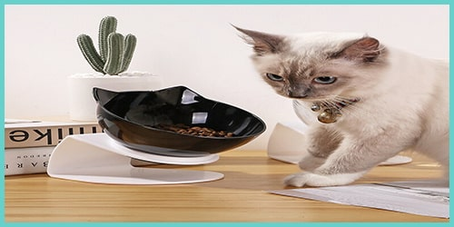 gamelle orthopédique pour chat simple bol - gamelle anti-vomissement pour chat et gamelle