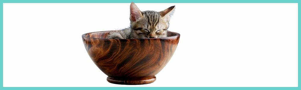 Comment réduire le stress de mon chat?