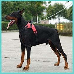 harnais anti-traction pour chien - harnais pour chien qui tire fort 1