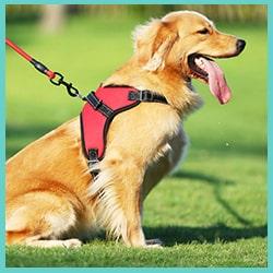harnais anti traction pour chien - harnais pour chien qui tire fort 2