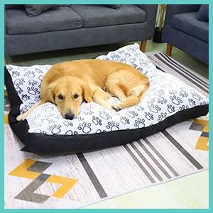 coussin orthopédique pour chien