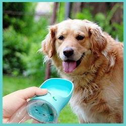 gourde pour chien bleu - gourde portable pour chien bleu
