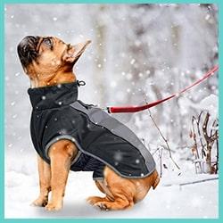 manteau chaud et imperméable pour chien