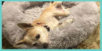 mon chien refuse de dormir dans son nouveau panier_1