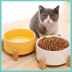 gamelle pour chat en céramique