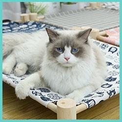 lit hamac surélevé chat