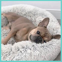 coussin apaisant pour chien réduit le stress