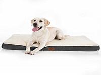 coussin pour chien orthopédique grande taille