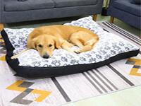 coussin pour chien orthopédique