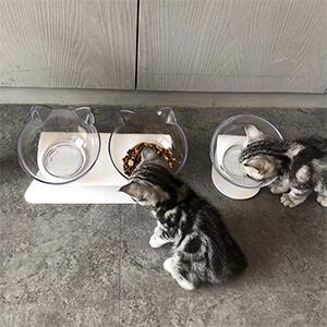 gamelle orthopédique pour chat - chatons mangent croquettes