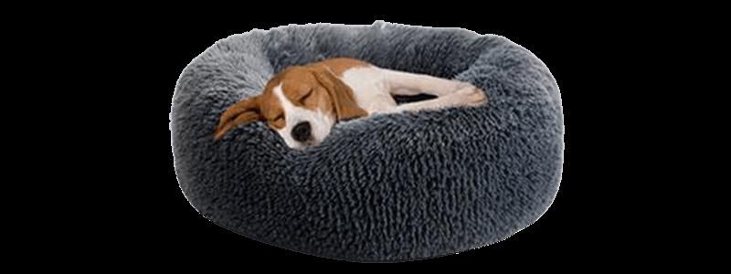 couchage apnee sommeil chien