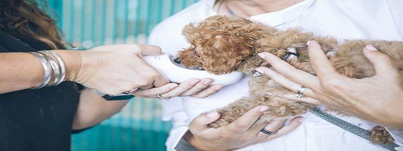 veterinaire apnee sommeil chien