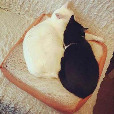 coussin pour chat en forme de toast