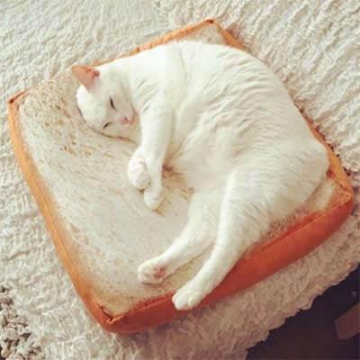 panier toast pour chat